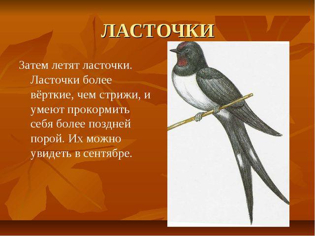 ЛАСТОЧКИ Затем летят ласточки. Ласточки более вёрткие, чем стрижи, и умеют пр...