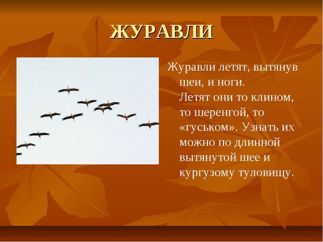 ЖУРАВЛИ Журавли летят, вытянув шеи, и ноги. Летят они то клином, то шеренгой,...
