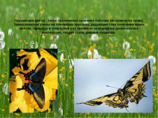 Порхающие цветы - такое поэтическое название бабочки заслужили по праву. Замы