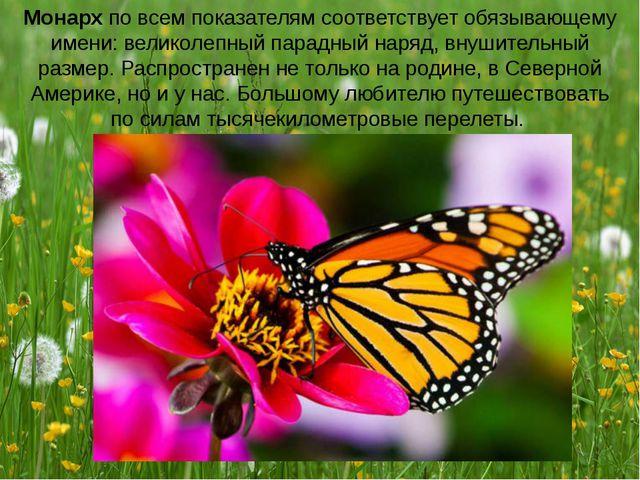 Монарх по всем показателям соответствует обязывающему имени: великолепный пар...
