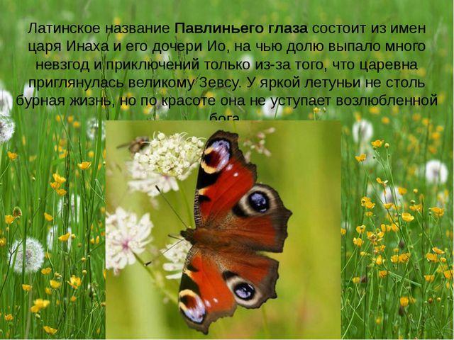 Латинское название Павлиньего глаза состоит из имен царя Инаха и его дочери И...