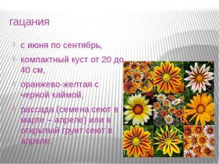 гацания с июня по сентябрь, компактный куст от 20 до 40 см, оранжево-желтая с