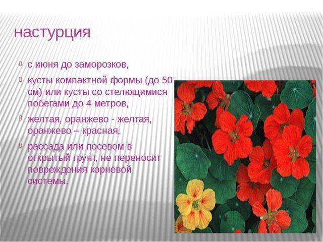 настурция с июня до заморозков, кусты компактной формы (до 50 см) или кусты с...
