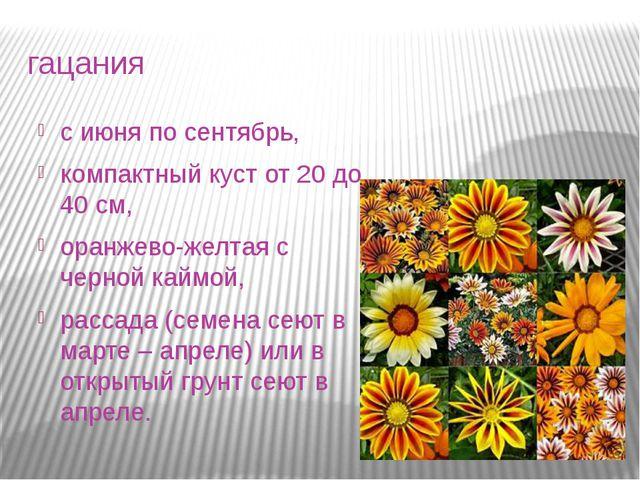 гацания с июня по сентябрь, компактный куст от 20 до 40 см, оранжево-желтая с...