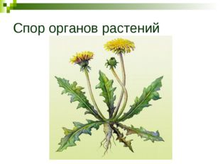 Спор органов растений