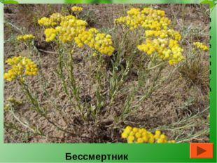 Иван Александрович Гончаров писал об этом растении: «Они (цветы) лежат не изм