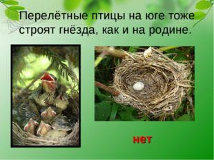 Перелётные птицы на юге тоже строят гнёзда, как и на родине. нет