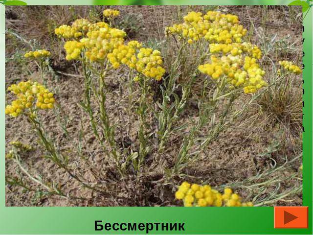 Иван Александрович Гончаров писал об этом растении: «Они (цветы) лежат не изм...