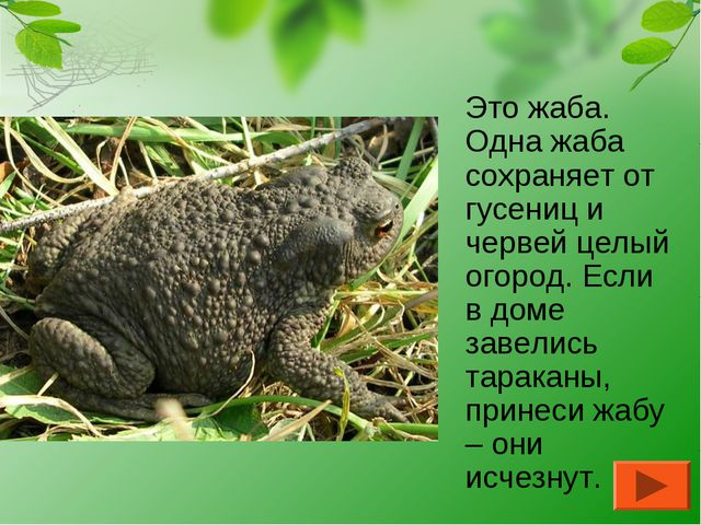 Это жаба. Одна жаба сохраняет от гусениц и червей целый огород. Если в доме...