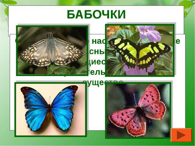 БАБОЧКИ Самые красивые насекомые. Хрупкие и прекрасные создания, превращающие...