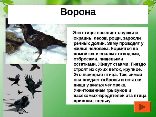 Эти птицы населяет опушки и окраины лесов, рощи, заросли речных долин. Зиму...