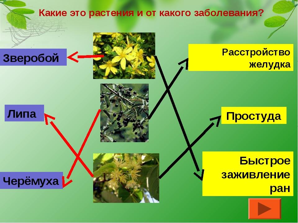 Какие это растения и от какого заболевания? Быстрое заживление ран Расстройст...