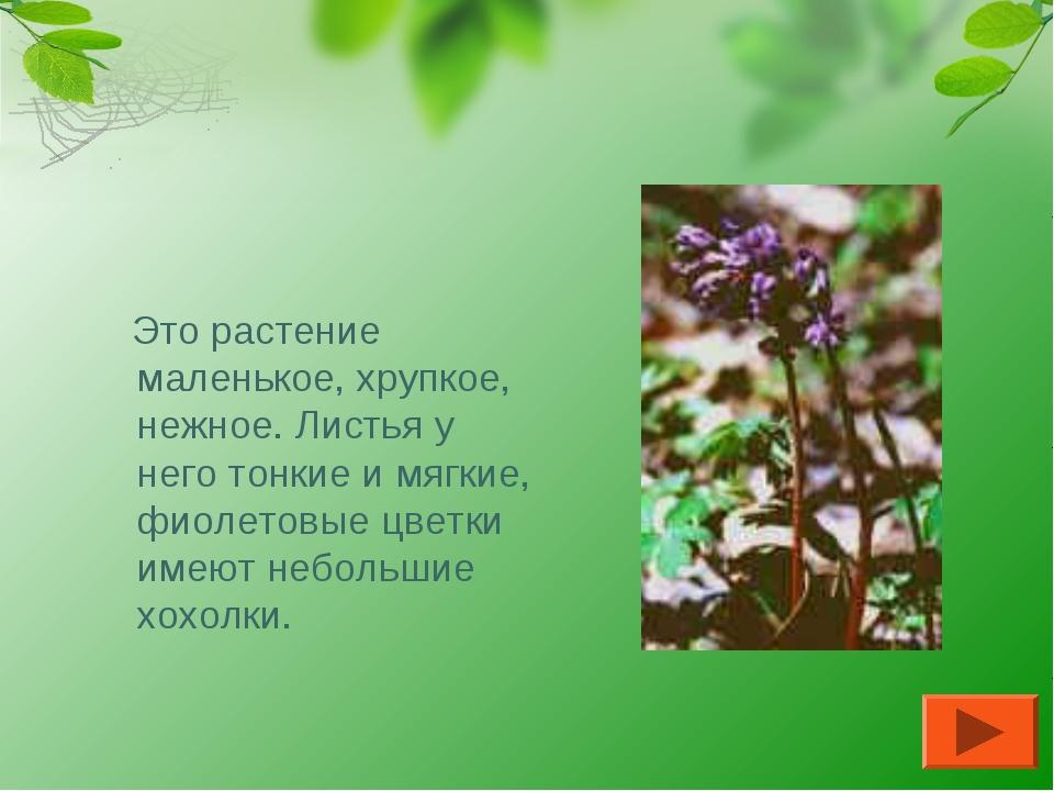 ХОХЛАТКА Это растение маленькое, хрупкое, нежное. Листья у него тонкие и мягк...