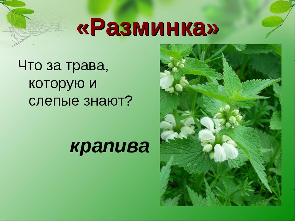 «Разминка» Что за трава, которую и слепые знают? крапива