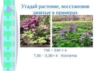 Угадай растение, восстановив запятые в примерах 736 – 336 = 4 7,36 – 3,36= 4