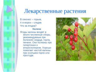 Лекарственные растения В сенокос – горька, А в мороз – сладка Что за ягодка?