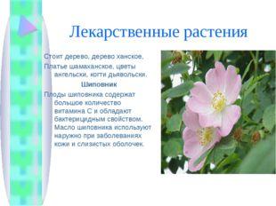 Лекарственные растения Стоит дерево, дерево ханское, Платье шамаханское, цвет