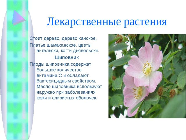 Лекарственные растения Стоит дерево, дерево ханское, Платье шамаханское, цвет...