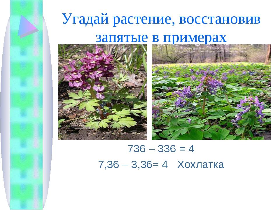 Угадай растение, восстановив запятые в примерах 736 – 336 = 4 7,36 – 3,36= 4...