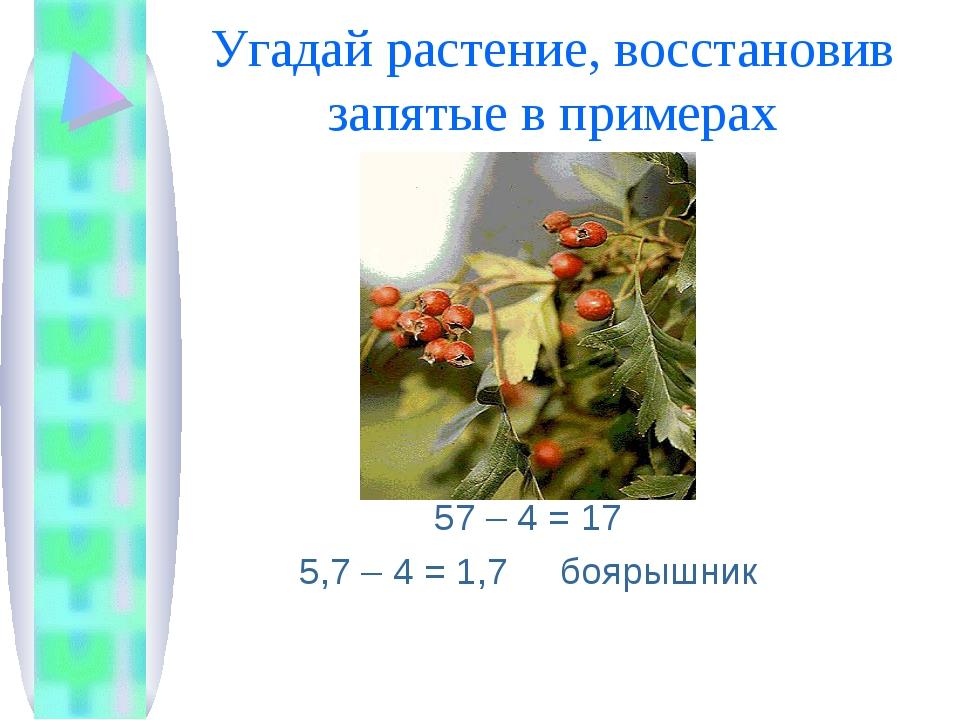 Угадай растение, восстановив запятые в примерах 57 – 4 = 17 5,7 – 4 = 1,7 боя...