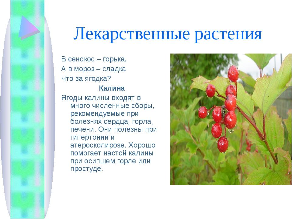 Лекарственные растения В сенокос – горька, А в мороз – сладка Что за ягодка?...