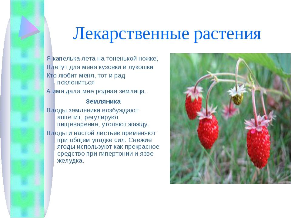 Лекарственные растения Я капелька лета на тоненькой ножке, Плетут для меня ку...