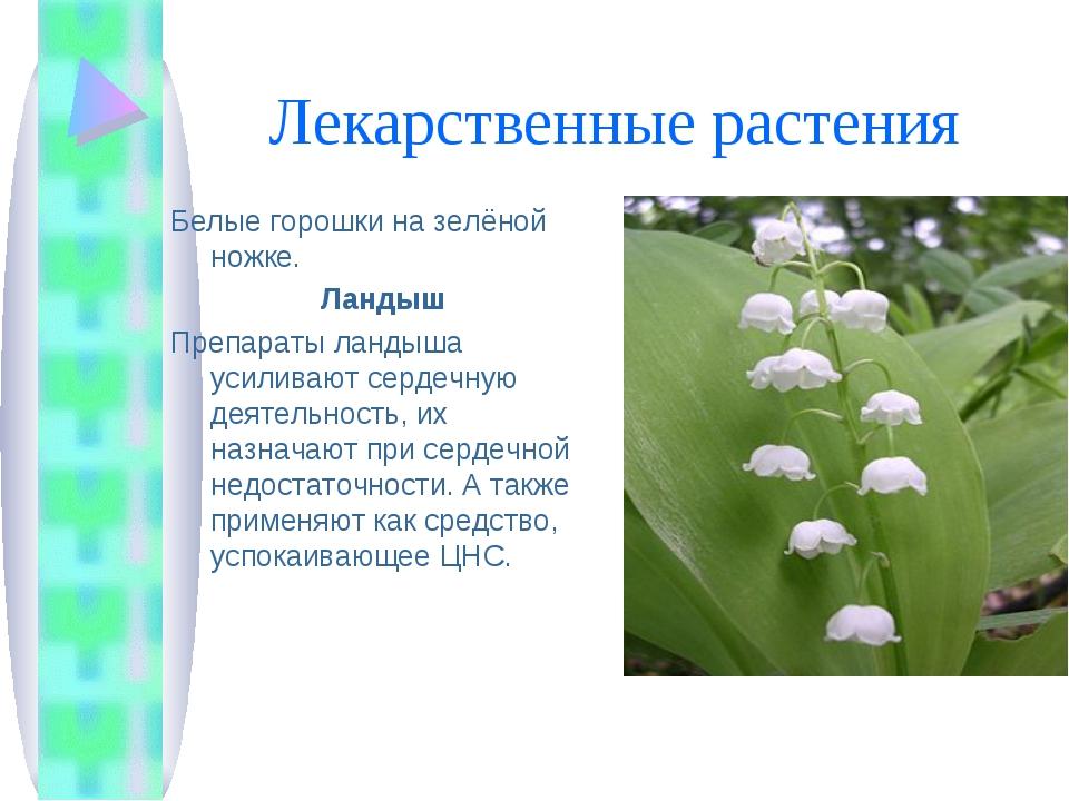 Лекарственные растения Белые горошки на зелёной ножке. Ландыш Препараты ланды...
