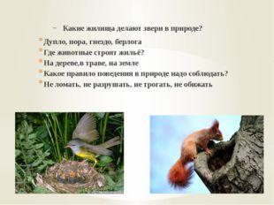 Какие жилища делают звери в природе? Дупло, нора, гнездо, берлога Где животн