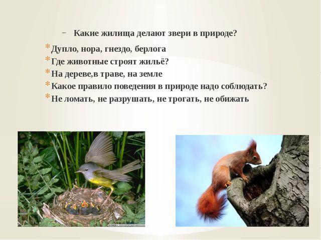Какие жилища делают звери в природе? Дупло, нора, гнездо, берлога Где животн...