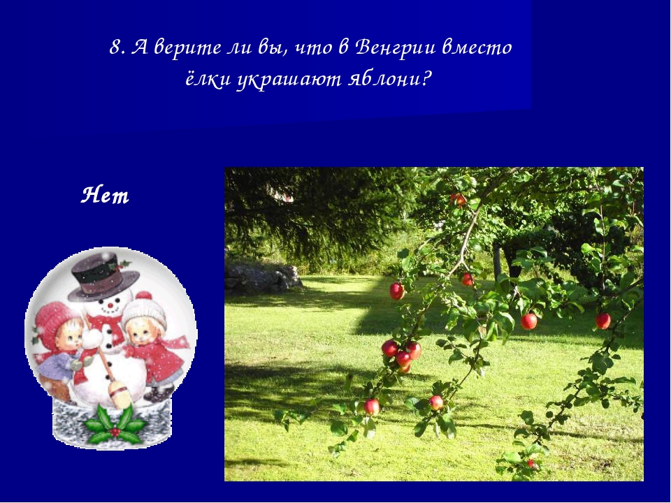 8. А верите ли вы, что в Венгрии вместо ёлки украшают яблони? Нет