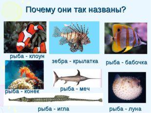 Почему они так названы? рыба - игла рыба - клоун рыба - бабочка рыба - луна з