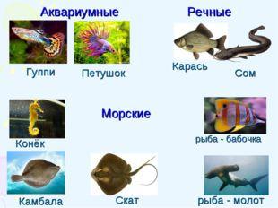 Петушок Камбала Конёк Гуппи Карась Скат Сом рыба - бабочка Аквариумные Речные