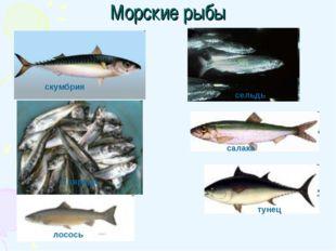 Морские рыбы скумбрия сельдь ставрида салака тунец лосось