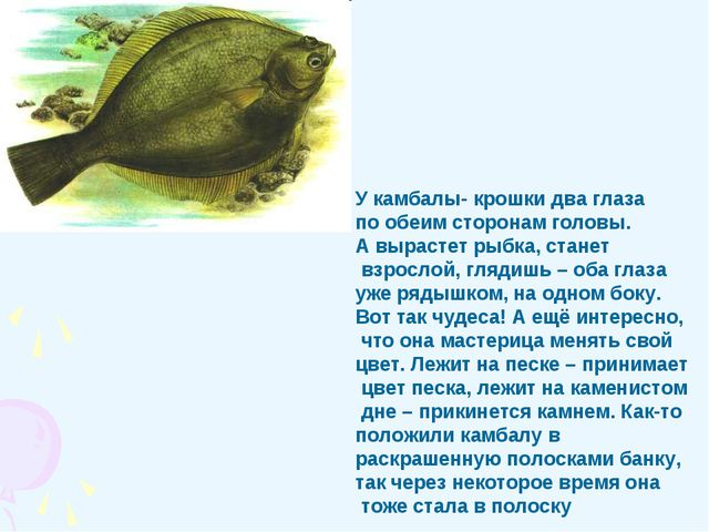 У камбалы- крошки два глаза по обеим сторонам головы. А вырастет рыбка, стане...