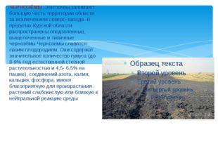 ЧЕРНОЗЁМЫ. Эти почвы занимают большую часть территории области за исключение