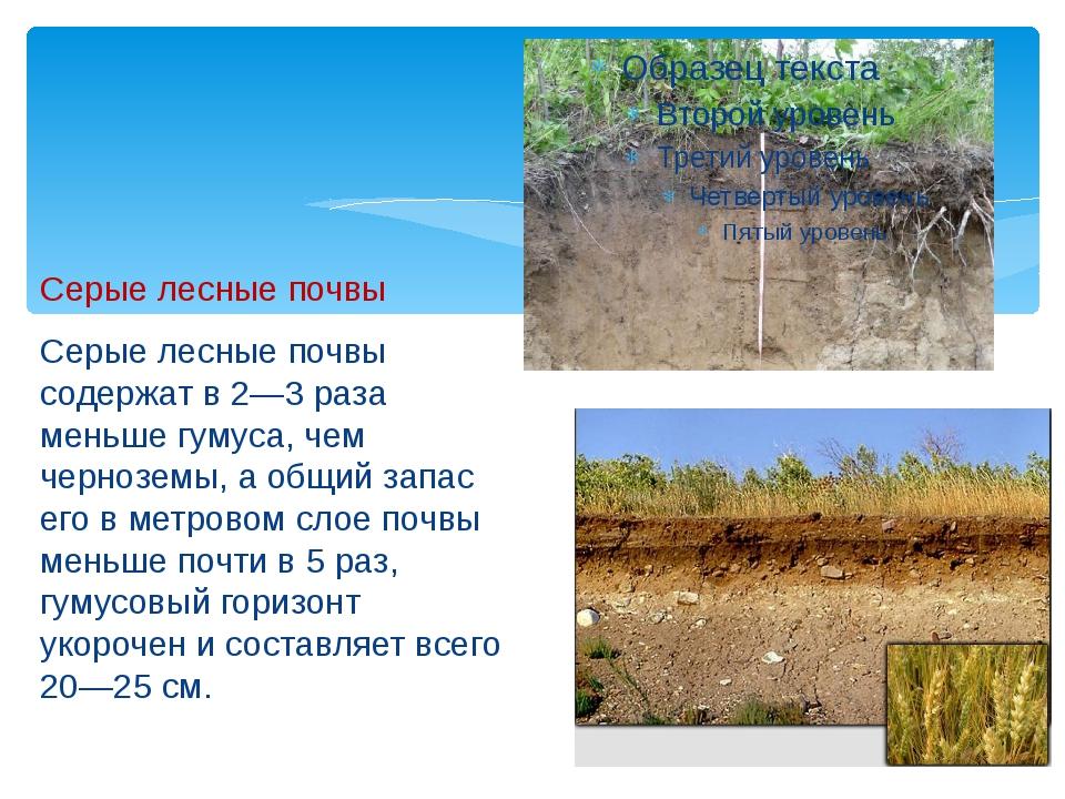 Серые лесные почвы Серые лесные почвы содержат в 2—3 раза меньше гумуса, чем...