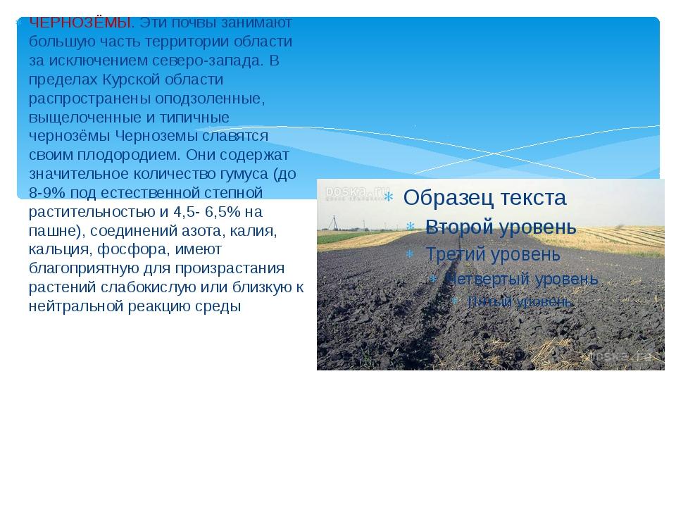 ЧЕРНОЗЁМЫ. Эти почвы занимают большую часть территории области за исключение...