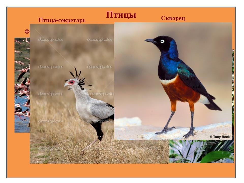 Птицы Фламинго Тукан Птица-секретарь Скворец