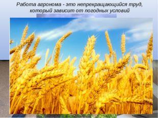 Работа агронома - это непрекращающийся труд, который зависит от погодных усл