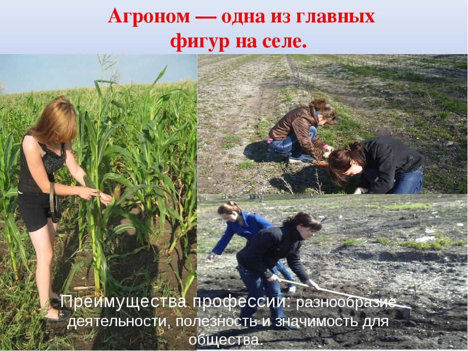 Агроном — одна из главных фигур на селе. Преимущества профессии: разнообразие...