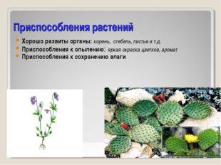 Приспособления растений Хорошо развиты органы: корень, стебель, листья и т.д.