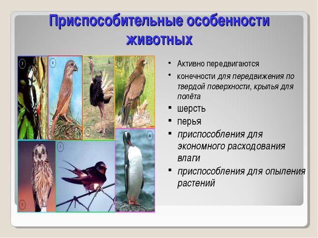Приспособительные особенности животных Активно передвигаются конечности для п...