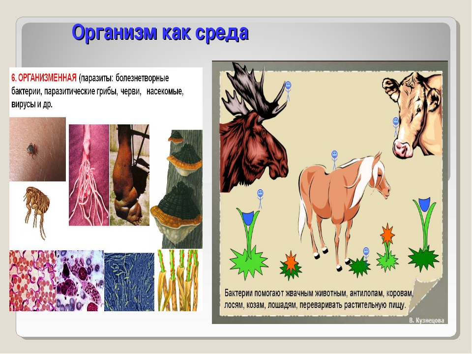 Организм как среда