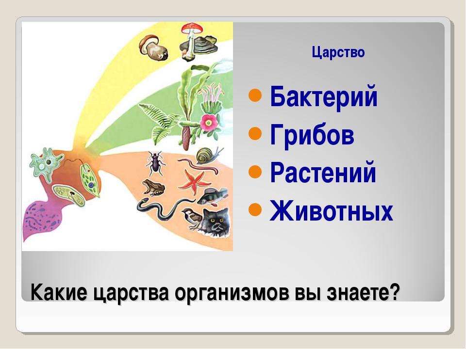 Какие царства организмов вы знаете? Царство Бактерий Грибов Растений Животных