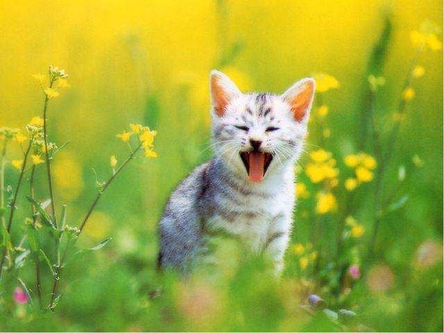 Найди ошибки У котенка есть три пушистые лапки. Он громко лает. От радости он...