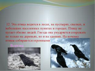 12. Эта птица водится в лесах, на пустырях, свалках, в небольших населенных