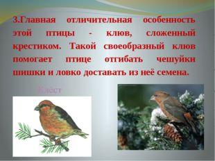 3.Главная отличительная особенность этой птицы - клюв, сложенный крестиком. Т