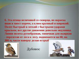 6. Эта птица величиной со скворца, но окраска иная и хвост короче, а клюв кру