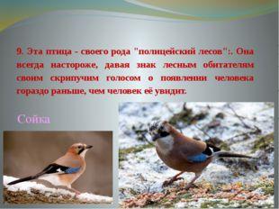 """9. Эта птица - своего рода """"полицейский лесов"""":. Она всегда настороже, давая"""