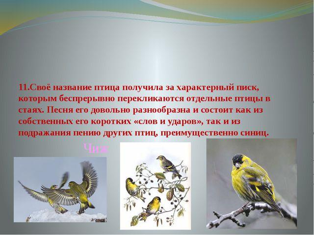 11.Своё название птица получила за характерный писк, которым беспрерывно пере...